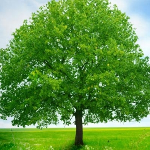 Root Fertilization
